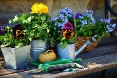 garden-2179530_1920