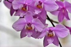 orchids-4029492_1920